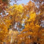 Herbstlicher Buchenwald V