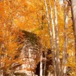 Herbstlicher Buchenwald VII