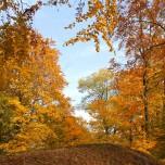 Festungswald