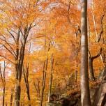 Herbstlicher Wald I