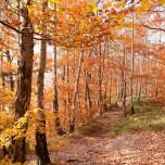 Herbstlicher Wald V