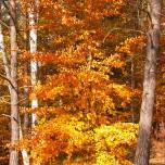 Herbstlicher Wald VI