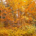 Herbstlicher Wald VII