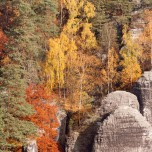 Detail Elbsandsteingebirge