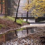 Amselgrundbach