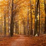 Gemütlicher Wanderweg I