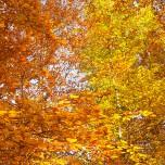 Herbstlicher Wald VIII