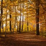 Herbstlicher Wald IX