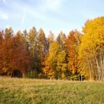 Herbstlicher Wald X