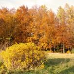 Herbstlicher Wald XI