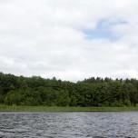 Ufer des Rätzsees I