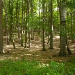 Grumsiner Forst II