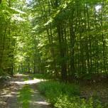 Waldweg III