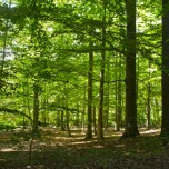 Grumsiner Forst VI