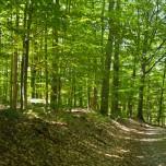 Waldweg IV