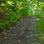 Waldweg V