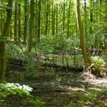Grumsiner Forst VII