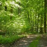 Waldweg VI