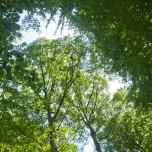 Walddach
