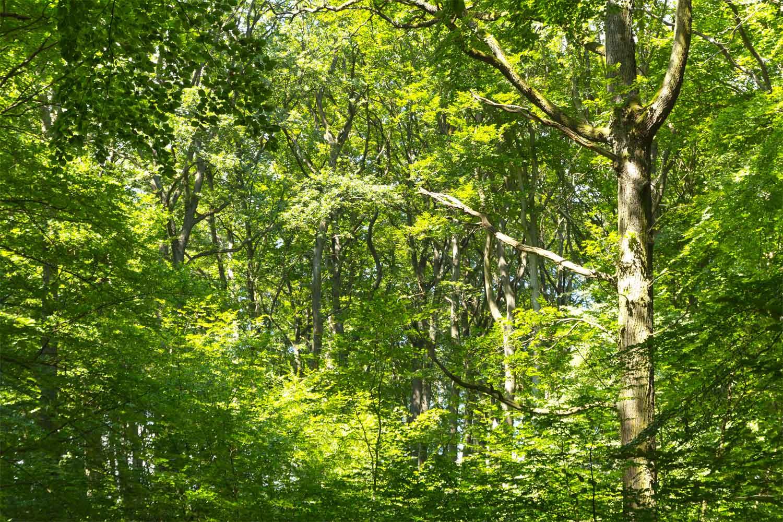 Wald in Schichten