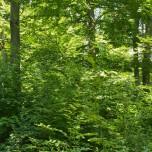 Grumsiner Forst VIII