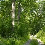 Waldweg VII