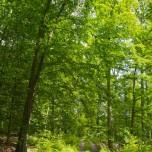 Waldweg VIII