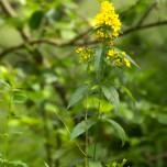 Gelbe Blüte II
