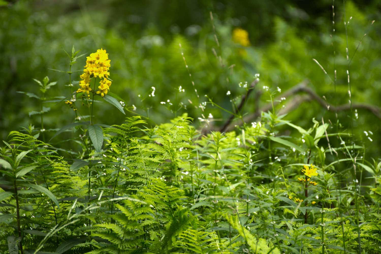 Gelbe Blüte I