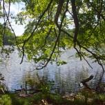 Waldsee III