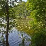 Waldsee IV