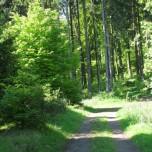 Waldweg I