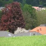 Dächer von Gerolstein II