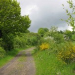 gelber Wanderweg I