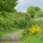 gelber Wanderweg II