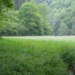 Wiese und Wald