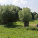 Havelland I