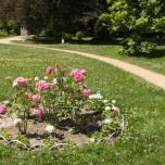 Blumenrabatte II