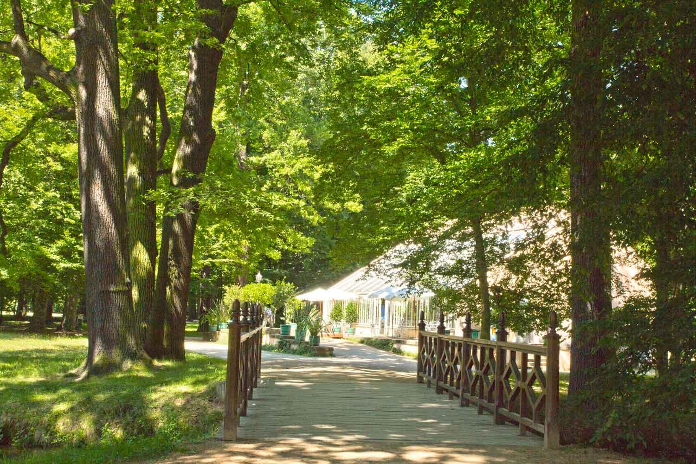 Branitzer Park: Weg zum Gewächshaus