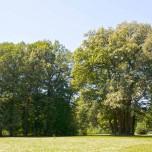 Prächtige Bäume II