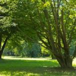 Parkbäume