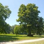 Parklandschaft I