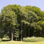 Prächtige Bäume III