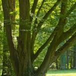 Parkbäume II