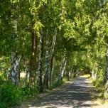 Gurken-Radweg II