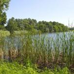 Stradower Teich I