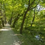 Schöner Radweg II