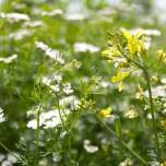 Gartendetail I