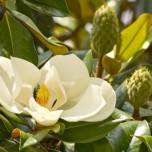 Große Blüte I