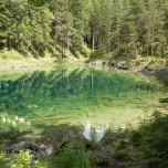 Stämme im klaren Wasser